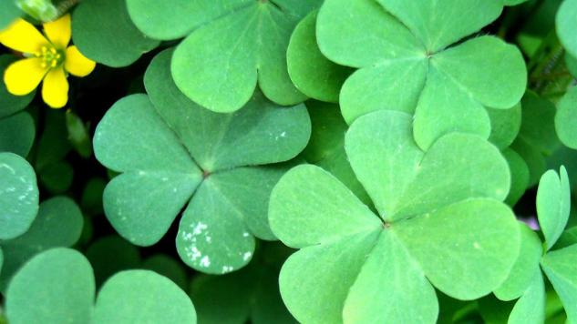 st-patrick-why-green_HD__366187_1104x622-16x9